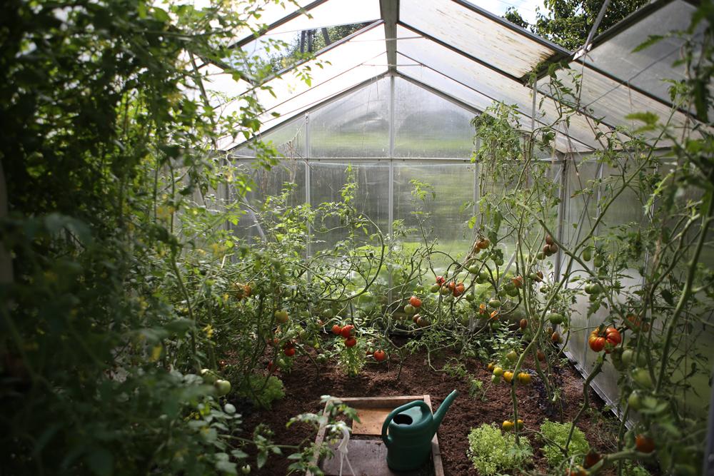 symbolfoto glashaus mit pflanzen
