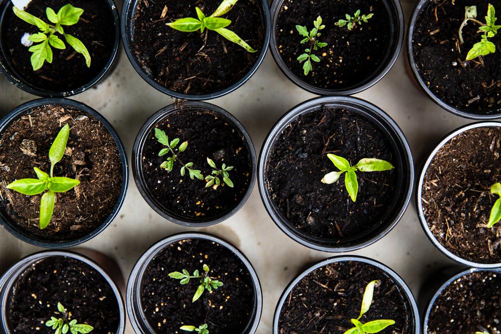 symbolfoto wachsende pflanzen in toepfen