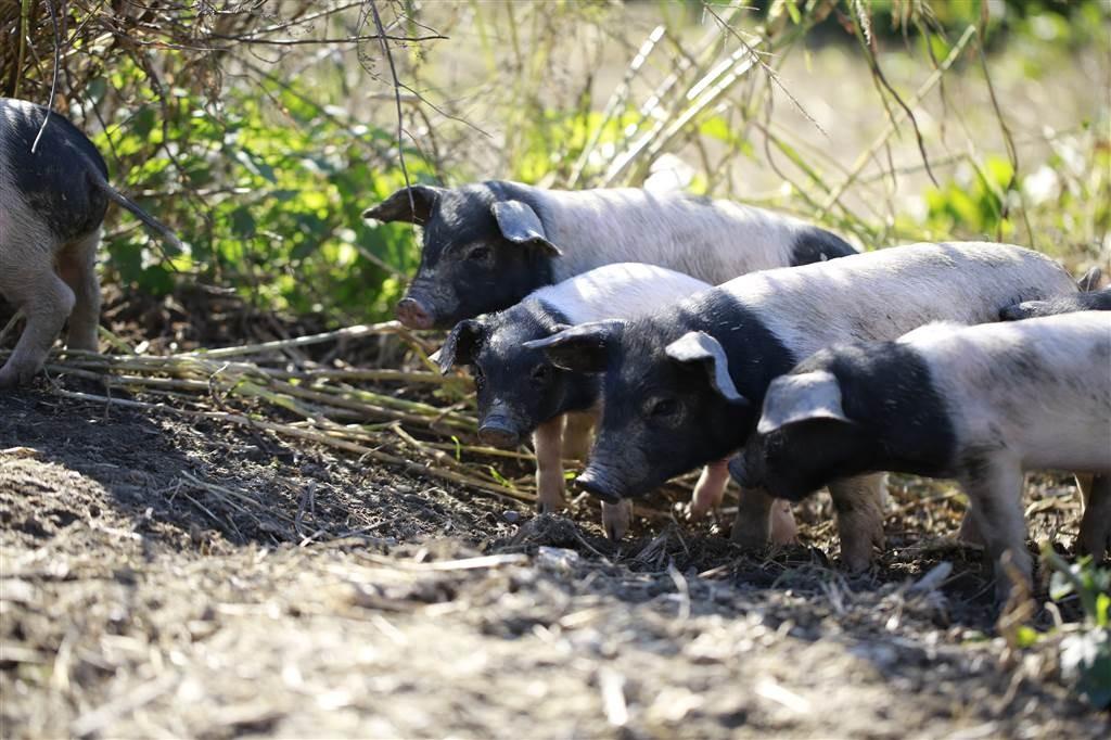 gemeinsam Bio Schweinefleisch bestellen