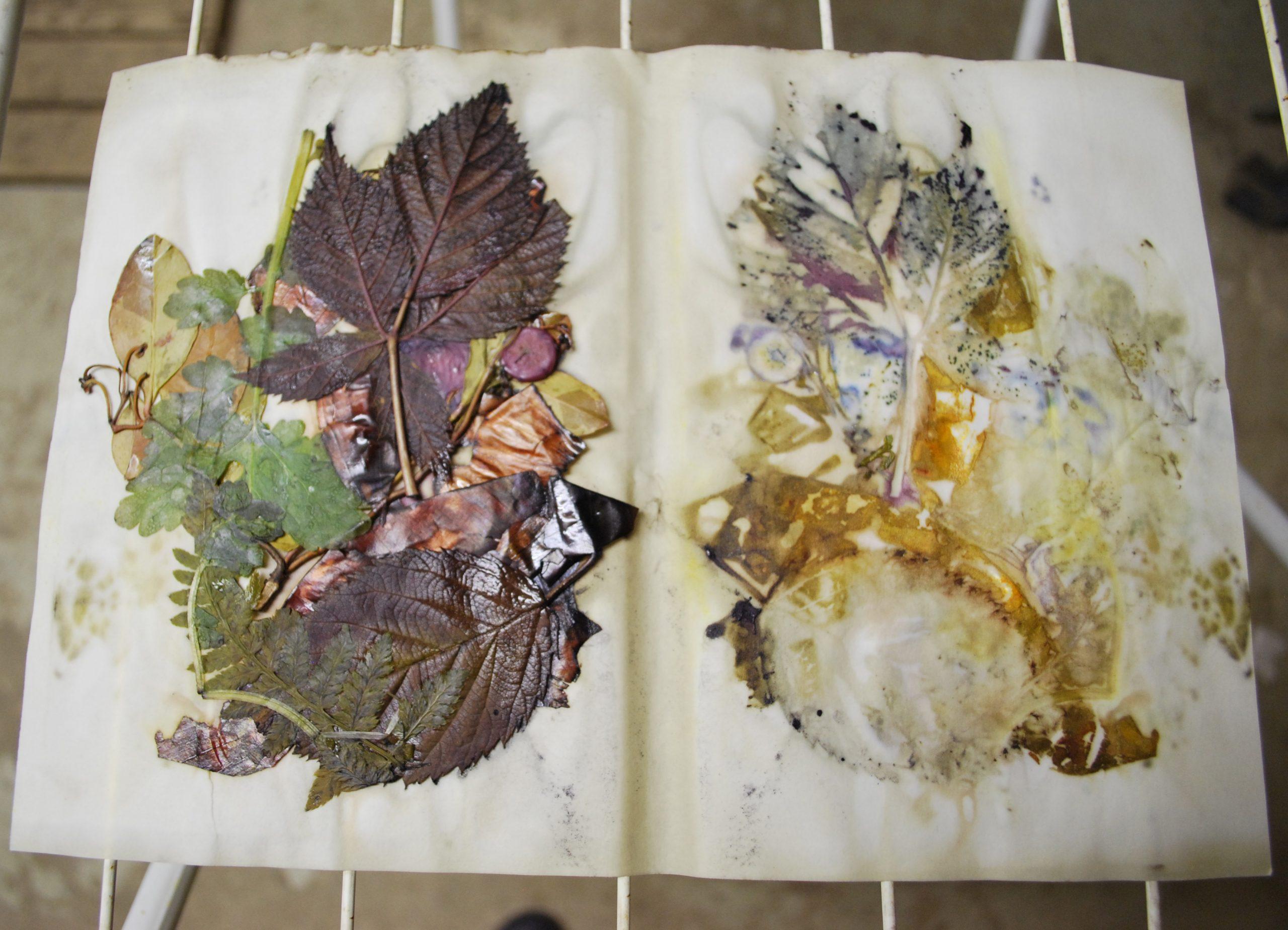 Eco Print Pflanzendruck auf Papier